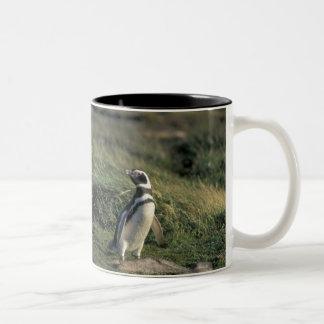 Magellanic Penguin (Spheniscus magellanicus), Two-Tone Coffee Mug