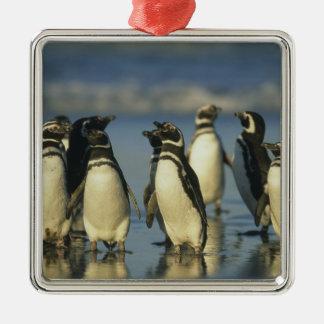 Magellanic Penguins, Spheniscus Silver-Colored Square Decoration