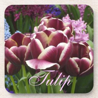 Magenta Cream Tulips Beverage Coaster