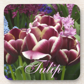 Magenta Cream Tulips Drink Coaster