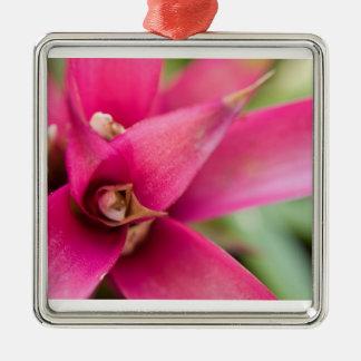 Magenta Flaming Sword Bromeliad Plant Christmas Ornaments
