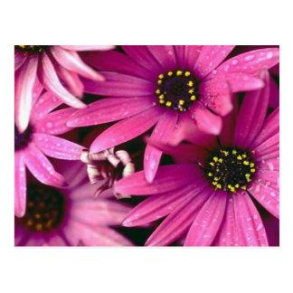 Magenta Flowers Postcard