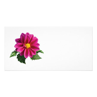 Magenta Gerbera Daisy Customized Photo Card