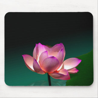 Magenta Lotus in full bloom, mousepad