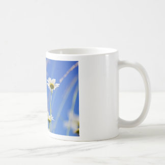 Mageriten Himmel Leucanthemum vulgare Kaffee Haferl