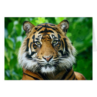Magestic Bengal Tiger Greeting Card