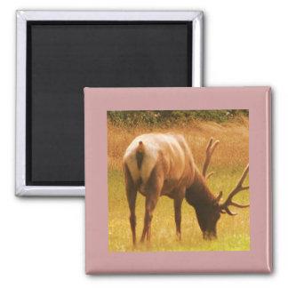 Magestic Bull Elk Square Magnet