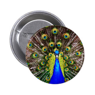 Magestic Peacock Pinback Buttons