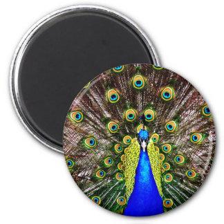 Magestic Peacock 6 Cm Round Magnet