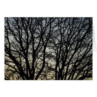 Magestic Tree Closeup Greeting Cards