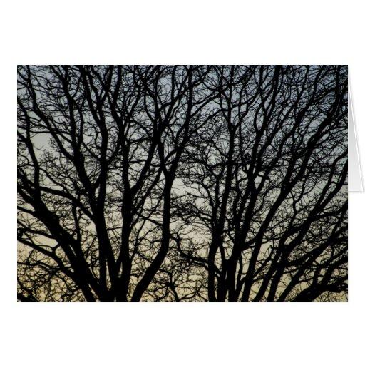 Magestic Tree Closeup Greeting Cards