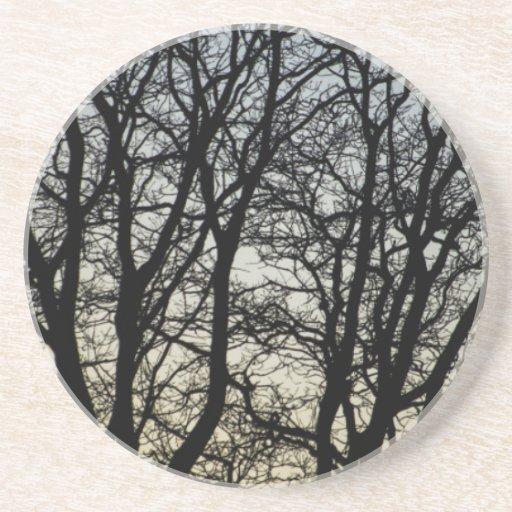 Magestic Tree Closeup Beverage Coasters
