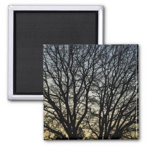 Magestic Tree Closeup Fridge Magnets