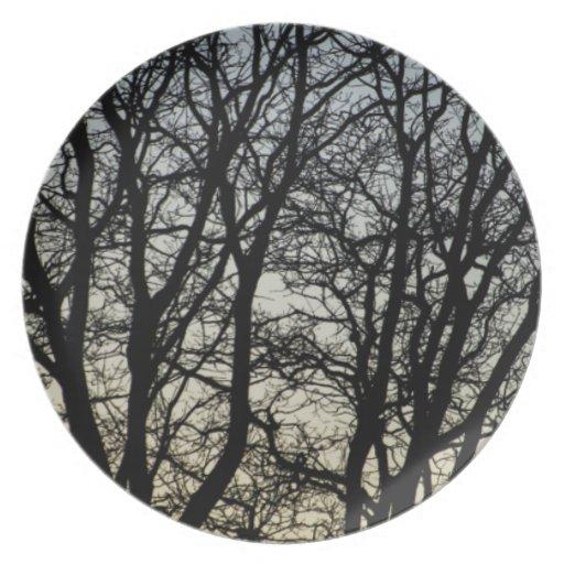 Magestic Tree Closeup Dinner Plates