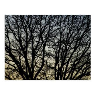 Magestic Tree Closeup Postcard