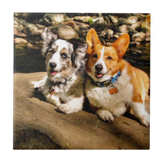 Maggie and Charlie's Vacation Tile