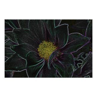 Magic Flower Photograph