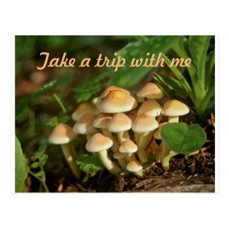 Magic Mushroom Trip Postcard
