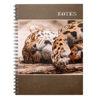 magical felines notebook