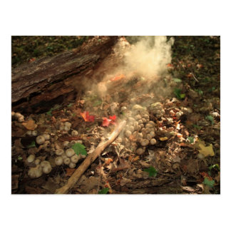 Magical Fungi Postcard