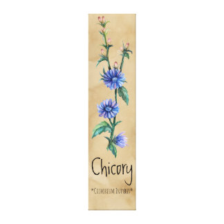 Magical Plants Chicory 9.76'' x 41.34'' Canvas