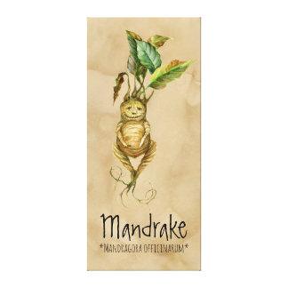 Magical Plants Mandrake 2 20.24'' x 45.36'' Canvas
