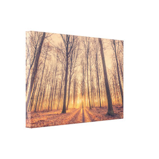 Magical sunrise in the forest canvas print