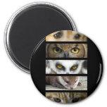 Magnet - Animals Eyes