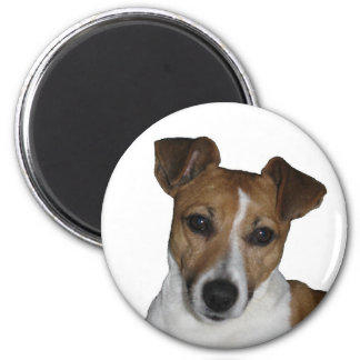 Magnet, approximately, Jack Russell Terrier 6 Cm Round Magnet