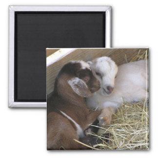 Magnet ~ Baby Goat :: Love
