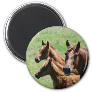 Magnet - Chestnut Mare & Foals