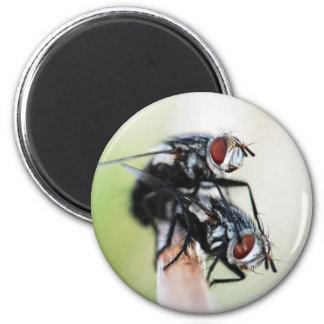 Magnet: Flies 6 Cm Round Magnet