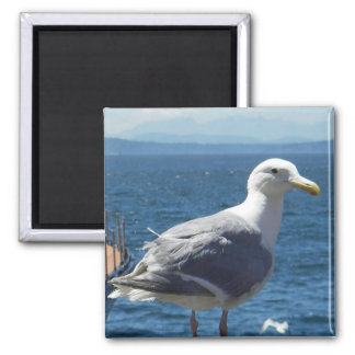Magnet: Glaucous-winged Seagull Magnet