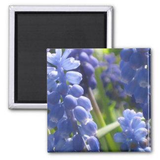 Magnet - Grape Hyacinth