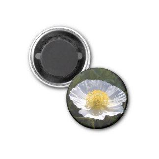 Magnet in the Iceland poppy Design 05