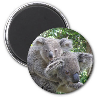 Magnet Koala and Baby Australia Photo