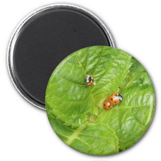Magnet - Ladybirds