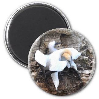Magnet loving gannets
