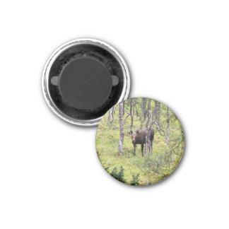 Magnet mit Elch 02 Magnets