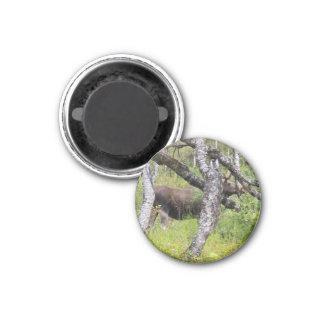 Magnet mit Elch 03 Kühlschrankmagnet