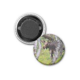 Magnet mit Elch 04 Magnets