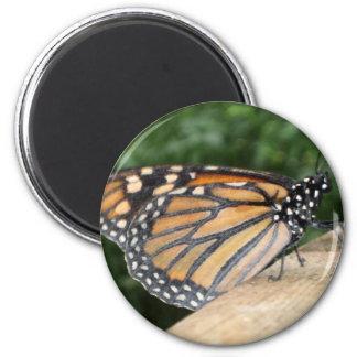 Magnet - Monarch Butterfly