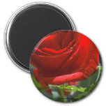 Magnet-Red Rose with water star