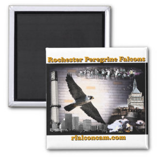 Magnet Rochester Peregrine Falcons