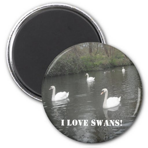Magnet Swans Swimming, I Love Swans Magnet