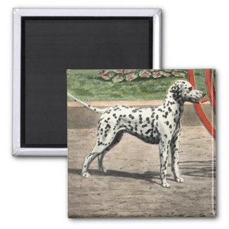 Magnet-Vintage Dalmatian Picture Square Magnet