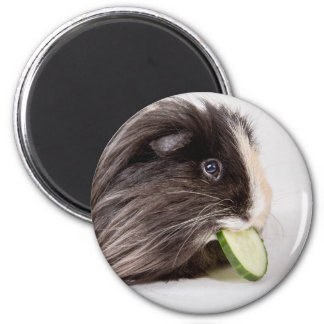 Magnet with cute guinea pig eating cucumber