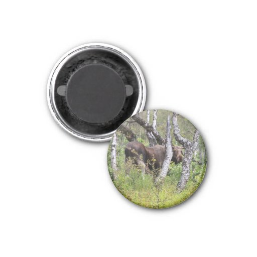 Magnet with moose 01