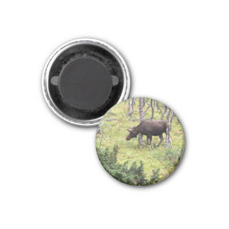 Magnet with moose 06