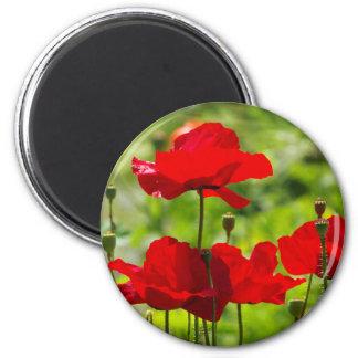 Magnet with red Corn Poppy Kühlschrankmagnete